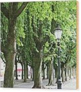 European Park Trees Wood Print
