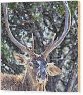 European Red Deer Wood Print