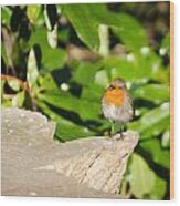 European Robin Wood Print