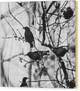 European Starlings Wood Print