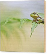 European Tree Frog Wood Print