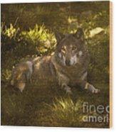 European Wolf Wood Print