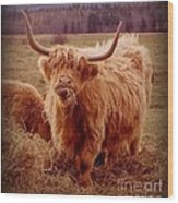 Even Cape Breton Cattle Have Character Wood Print
