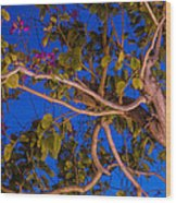 Evening Blues Wood Print