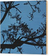 Evening Branches Wood Print