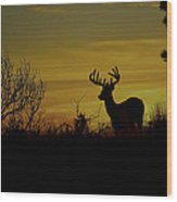Evening Buck Wood Print