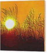 Evening Dunes Wood Print