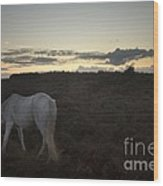 Evening In New Forest Wood Print