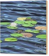 Evening Lake With Water Lily Wood Print
