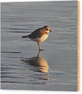 Evening Plover Wood Print