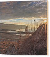 Evening Star Wood Print