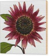 Evening Sun Sunflower 2 Wood Print