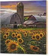 Evening Sunflowers Wood Print