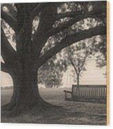 Evening Swing - Oak Tree - Altus Arkansas Wood Print