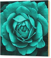 Evening Teal Rose Flower Wood Print