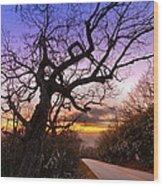 Evening Tree Wood Print by Debra and Dave Vanderlaan