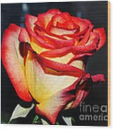 Event Rose 3 Wood Print