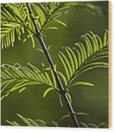 Ever Green Wood Print