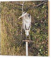 Ever Watchful Blue Heron Wood Print
