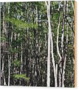 Everglade Magic Wood Print