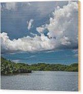 Everglades 0254 Wood Print