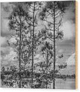 Everglades 0336bw Wood Print