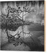 Everglades 0346 Wood Print
