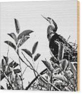 Everglades 20 Wood Print