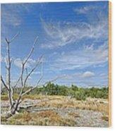 Everglades Coastal Prairies Wood Print