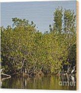 Everglades'  Egrets Wood Print