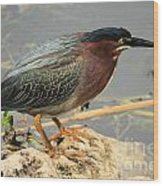 Everglades Green Heron Wood Print