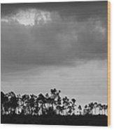 Everglades No.5  Wood Print