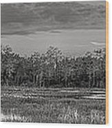 Everglades Panorama Bw Wood Print