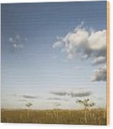 Everglades Plain Wood Print
