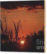 Everglades Sunset Wood Print by Steven Valkenberg