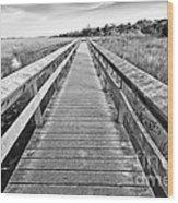 Everglades Trails Wood Print