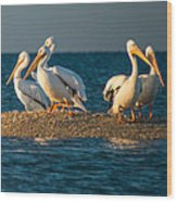 Everglades White Pelicans Wood Print