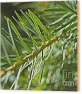 Evergreen Dream By Jrr Wood Print