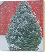 Evergreen In Winter 2 Wood Print