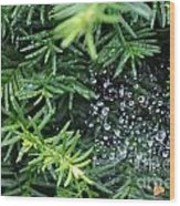 Evergreen Rain Wood Print