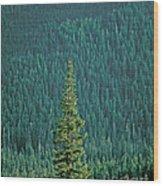 Evergreen Trees Wood Print
