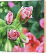 Everything's Coming Up Geraniums Wood Print