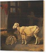 Ewe And Lambs Wood Print