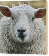 Ewe's Just Fluffy Wood Print