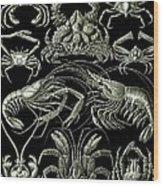 Examples Of Decapoda Kunstformen Der Natur Wood Print