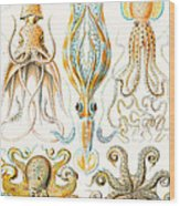 Examples Of Various Cephalopods Wood Print