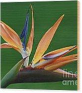 Exotic Bird Of Paradise Wood Print