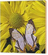 Exotic Butterfly Wood Print