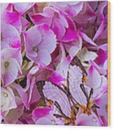 Exotic Butterfly On Hydrangea Wood Print