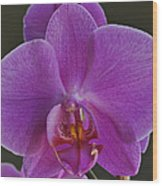 Exotic Orchid 2 Wood Print
